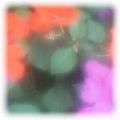 a0011190_23160.jpg