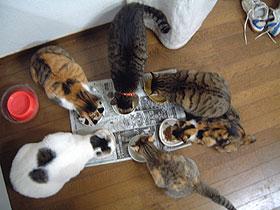 6匹の食事風景_a0028451_11040.jpg