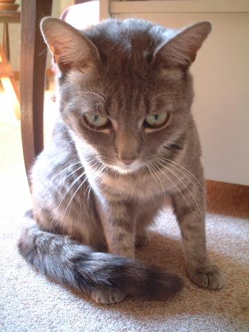 猫よ!_a0008105_174719.jpg