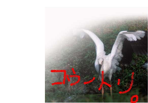 a0034951_8759.jpg