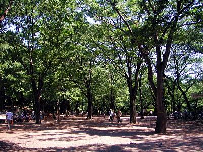 井の頭公園野外ステージ前広場 画像