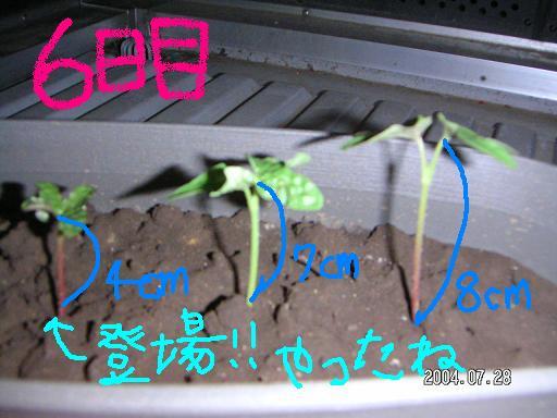 b0003404_3262036.jpg
