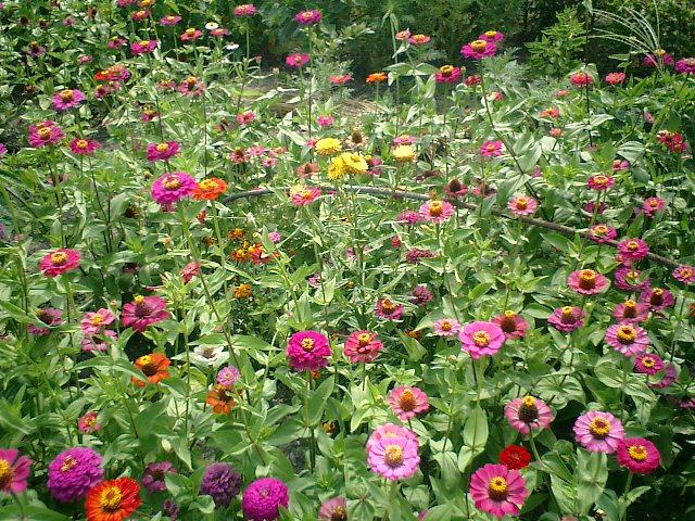 長野の花々の写真を二枚。_b0001864_22393571.jpg