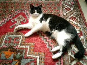 ドイツの白黒猫、ミミさん。_b0001864_1534625.jpg