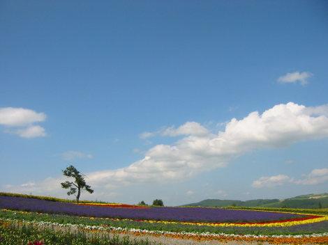 絵ハガキみたいな富良野の風景_b0011095_1813019.jpg