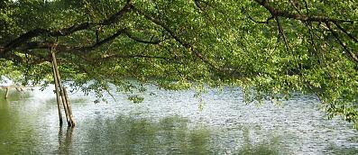 井の頭公園 木と池 画像