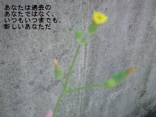 a0030205_19164681.jpg
