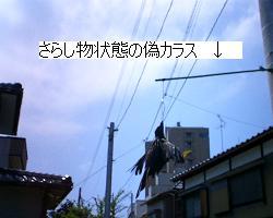 a0021683_12264769.jpg