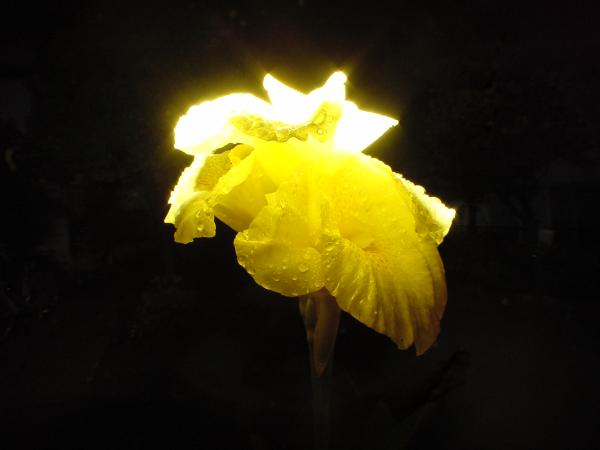 Flower_with_flash.jpg