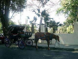 エジプトの馬、フランスの馬_b0001864_14522043.jpg