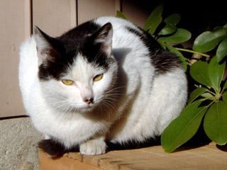 ノラ猫003 外猫_a0028451_13123599.jpg