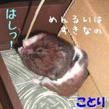 b0016983_13293620.jpg