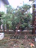 b0005536_18565760.jpg