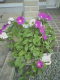 オムニバス「4つの花物語」_a0025572_2191417.jpg