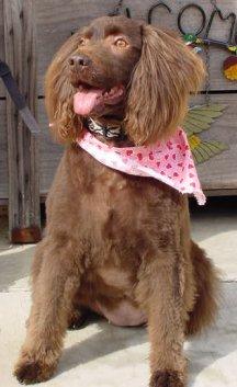 犬は癌をかぎわける能力がある。_a0028694_4334354.jpg
