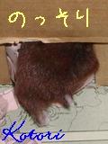 b0016983_73248100.jpg