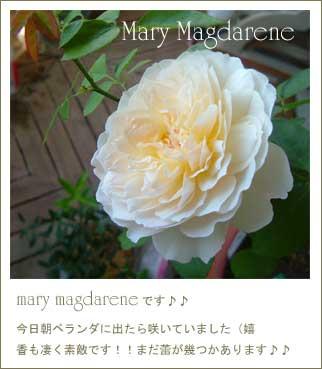 b0026786_20121790.jpg