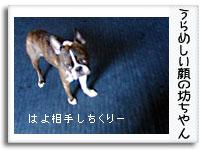 a0021581_1543854.jpg