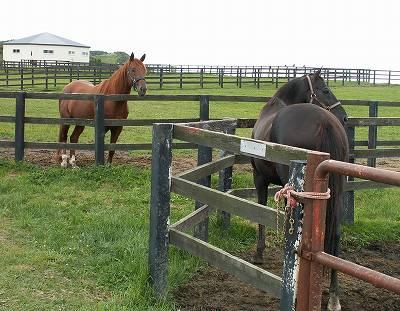 2004年8月、懐かしい馬たちに会いに行きました-その40-(ビッグサンデー)_b0015386_0205511.jpg