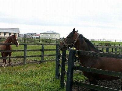 2004年8月、懐かしい馬たちに会いに行きました-その38-(カネトシガバナー)_b0015386_0331686.jpg