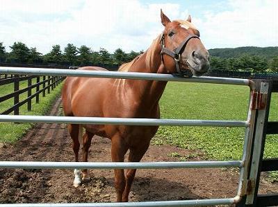2004年8月、懐かしい馬たちに会いに行きました-その15-(タイキシャトル)_b0015386_13323834.jpg