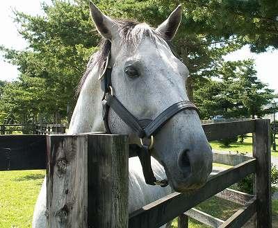 2004年8月、懐かしい馬たちに会いに行きました-その13-(セイウンスカイ)_b0015386_13375324.jpg