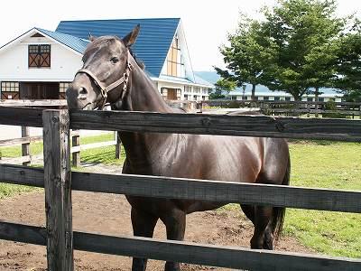 2004年8月、懐かしい馬たちに会いに行きました-その12-(ロイヤルタッチ&ワイルドラッシュ)_b0015386_13414510.jpg