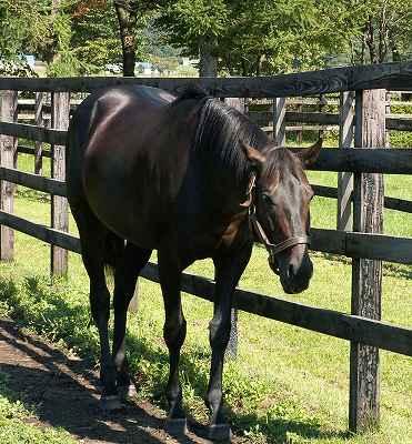 2004年8月、懐かしい馬たちに会いに行きました-その7-(ウイニングチケット)_b0015386_1358552.jpg