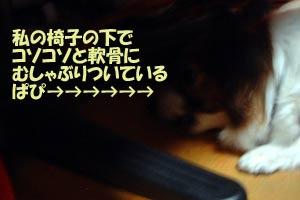 b0001166_0265194.jpg