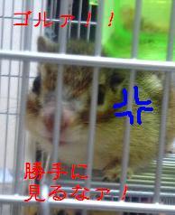 b0035356_18383243.jpg