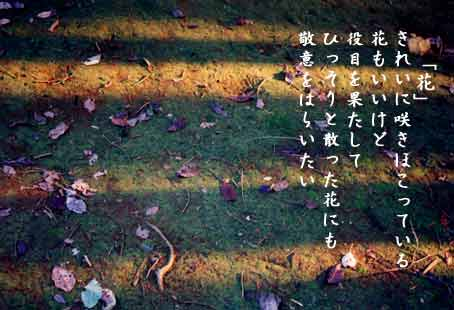 花_b0044724_20423252.jpg