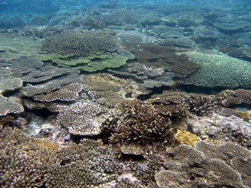 10/30 徳浜のサンゴ礁_a0010095_01734.jpg