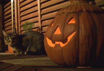 猫はかぼちゃを避ける_a0014810_9154958.jpg