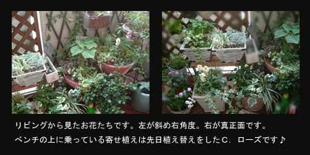 b0026786_22111356.jpg