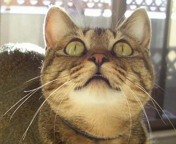 猫はハトと歌う_a0014810_985665.jpg