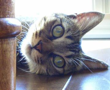 猫はハトと歌う_a0014810_993295.jpg