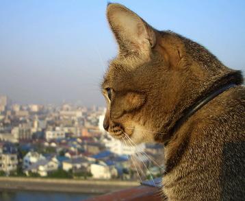 猫はハトと歌う_a0014810_99841.jpg