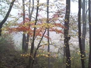 霧の中の紅葉_b0038919_8451336.jpg