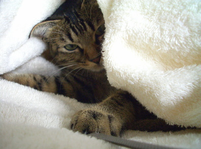 猫はカメラマンを襲う_a0014810_10482445.jpg