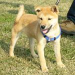 日本犬保存会秋季九州連合展_b0057675_1822825.jpg