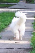 ★犬猫のしっぽの振り方から分かる彼らの感情と心の葛藤_a0028694_3425155.jpg