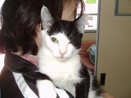 猫白血病のユウキくん_b0059154_2003066.jpg