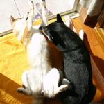 小春日和な平蔵_b0057675_1435193.jpg