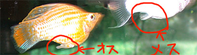 b0055807_18541365.jpg