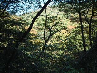 【秋+山=紅葉】 箱根での1コマ_b0000480_01418.jpg
