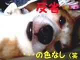 b0044986_513252.jpg