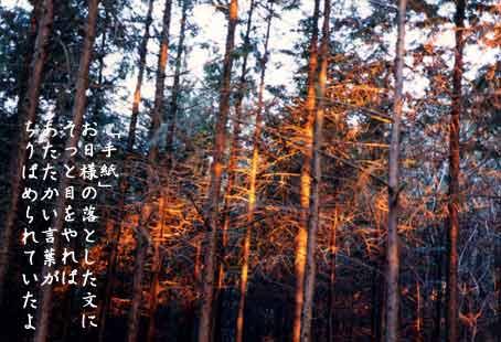 b0044724_1447384.jpg