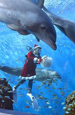 イルカにサンタがプレゼント_b0052564_14314158.jpg
