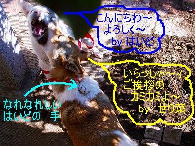 b0006329_19212310.jpg