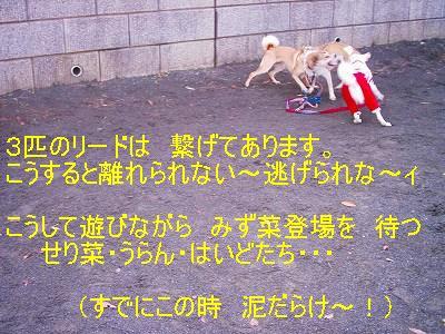 b0006329_19222726.jpg